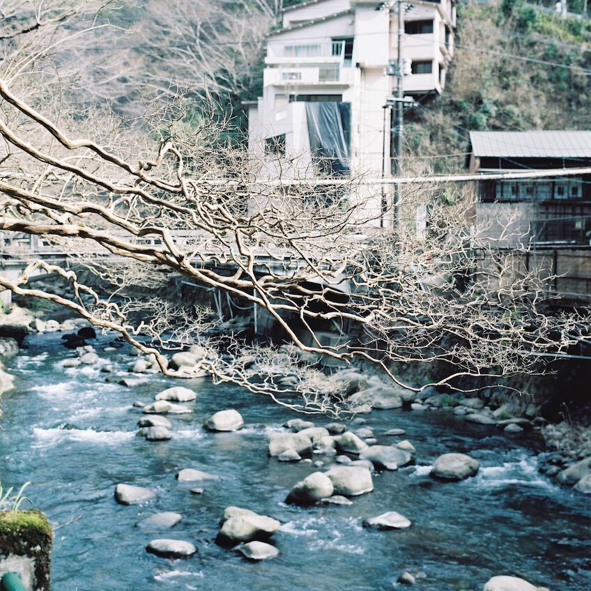 Tree branches reaching over river