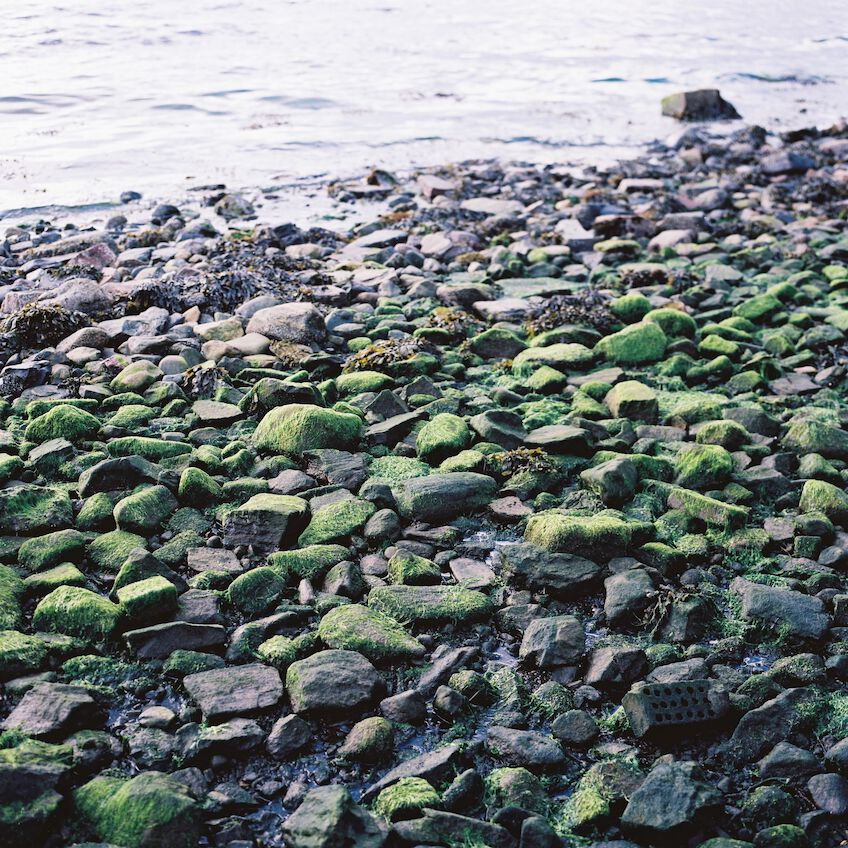 Moss covered stones at the shore