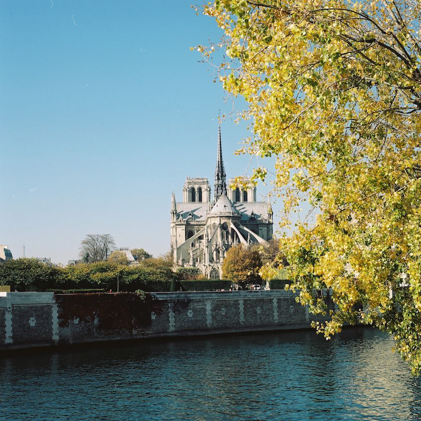 Notre Dame with a tree in the foreground