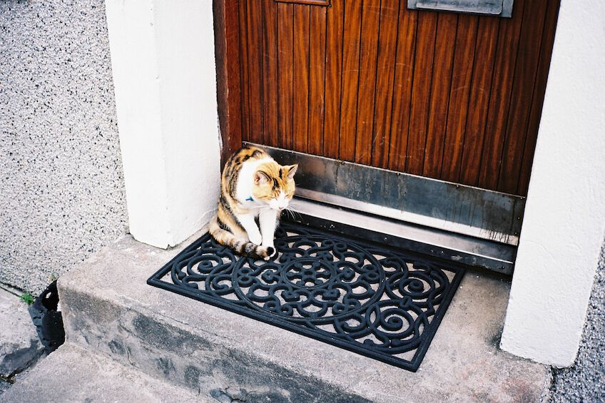 Cat sitting on a doormat