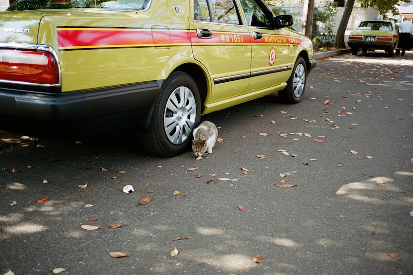 Cat sitting next to a cab